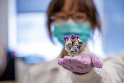 Un modèle 3D d'un nano-anticorps (violet) fixé sur la protéine S du SARS-CoV-2 (gris). © UPMC