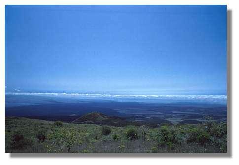 Sur l'île d'Isabela, les dix km de lave 'aa' de l'isthme de Perry séparant Sierra Negra (d'où est prise la photo) d'Alcedo, au fond à gauche, constituent une barrière écologique presque aussi efficace que la mer : ces deux volcans sont des îles écologiques abritant sa propre espèce de tortue. Mais les chèvres venues de la zone de colonisation d'Isabela ont réussi à franchir l'obstacle, et les tortues d'Alcedo sont désormais en danger d'extinction. Galapagos © IRD/Christophe Grenier.