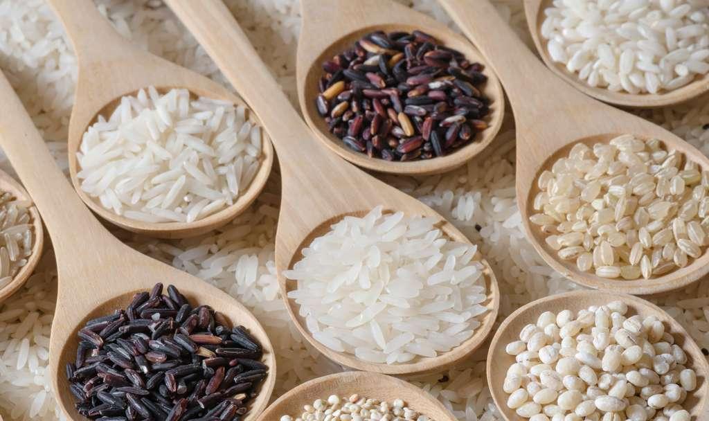 Il existe différentes espèces et variétés de riz. © peangdao, Fotolia