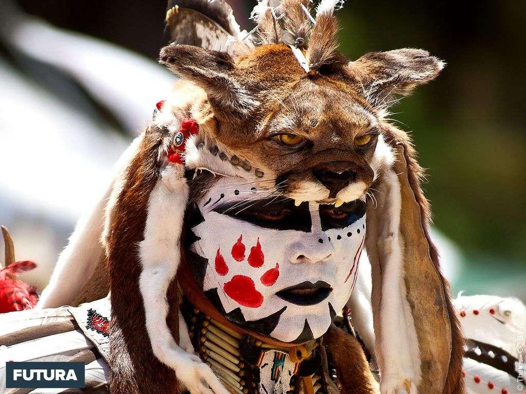 Indien Tête de puma - Stanford Pow-wow