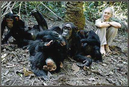 © Institut Jane Goodall France - Toute reproduction interdite