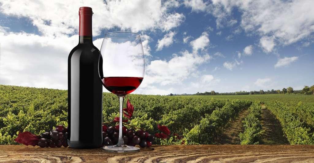 Les vins de Bourgogne font partie des incontournables. © Visivastudio, Shutterstock