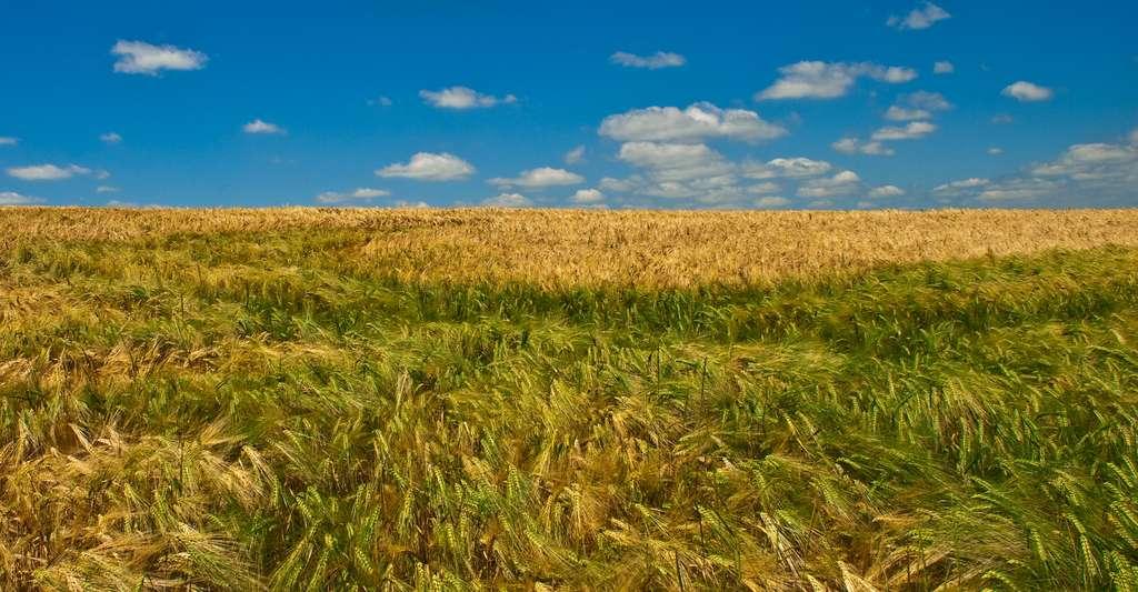 Pourquoi ne pas faire du tourisme en Haute-Saône ? Ici, des champs en Haute-Saône. © Olivier Poncelet, Fotolia