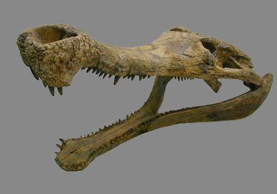 Crâne de Sarcosuchus imperator. © Barracuda 1983, Creative Commons Attribution-Share Alike 3.0 Unported license