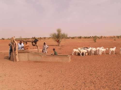 Au Nord d'Ayoûn El Atrous, en Mauritanie (octobre 2005) le puits de Mobrouk a une profondeur de 70 m sur le socle cristallin recouvert d'une nappe sableuse quaternaire. Un petit troupeau de moutons vient s'abreuver tandis que les bergers tirent l'eau du puits.