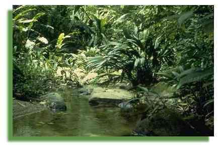 Copyright Lanaud Claire - Vénézuela, fôret tropicale 1999 - Cirad