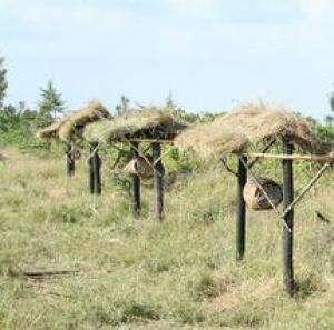 Une barrière de ruches à l'entrée d'une parcelle agricole. © Lucy King/Université d'Oxford
