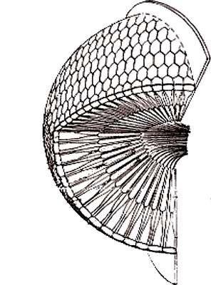 Schéma d'un œil composé. © Reproduction et utilisation interdites