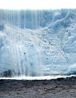 Des pétrels du Cap viennent pêcher autour de l'iceberg A-52. Derrière eux, une cataracte d'eau entraîne vers la mer la matière organique qui était emprisonnée dans la glace. Crédit : Rob Sherlock