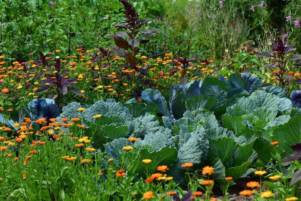 Potager décoratif, légumes et fleurs. © Congerdesign, Pixabay, Domaine Public