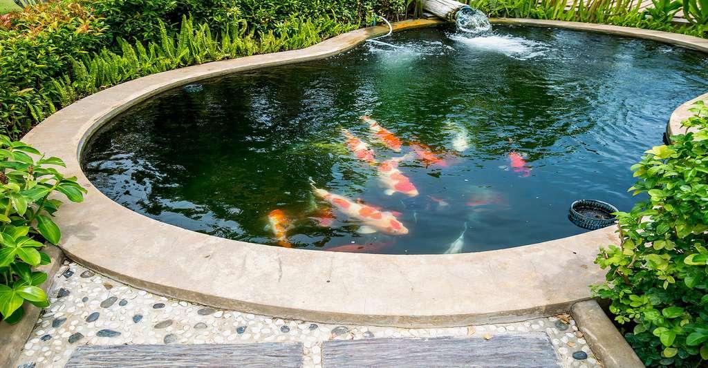 Les bassins de jardin en béton | Dossier