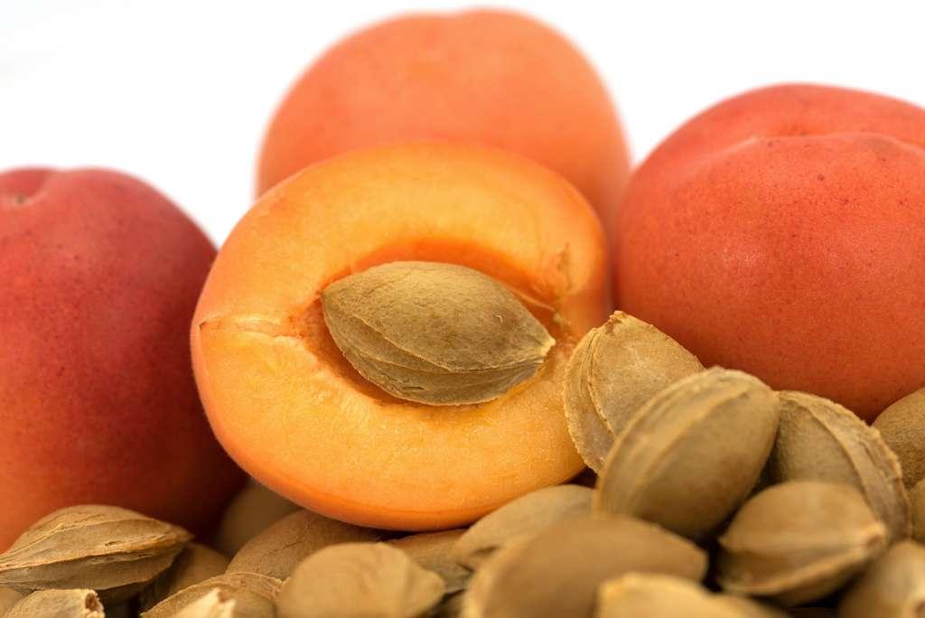 Les noyaux d'abricot contiennent de l'amygdaline, une molécule qui se transforme en acide cyanhydrique et sels de cyanures durant la digestion. L'ingestion de 50 noyaux d'abricot peut s'avérer mortelle. © M. Schuppich, Adobe Stock