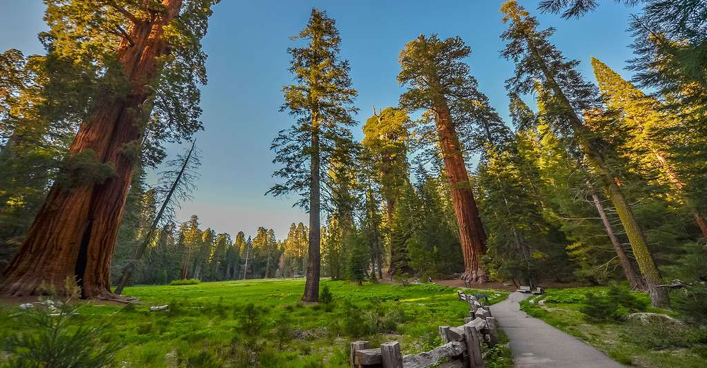 Forêt de séquoïas. © Asif Islam, Shutterstock