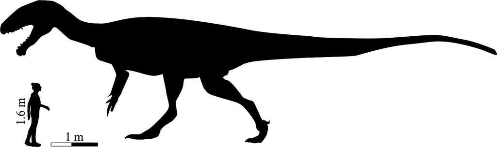 Une reconstitution de l'aspect et de la taille probables de Kayentapus ambrokholohali . © The University of Manchester