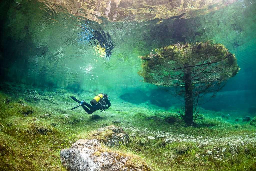 Un conifère sous les eaux