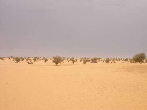 La désertification: une perturbation ou une adaptation de la végétation au climat ? (Bamba, Mali - 2004) © Photo Philippe Birnbaum - Tous droits de reproduction réservés