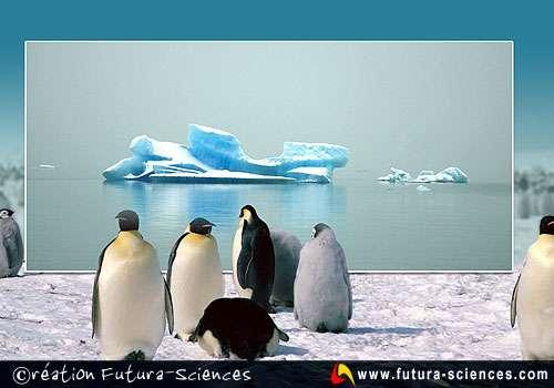 Pingouins en Arctique