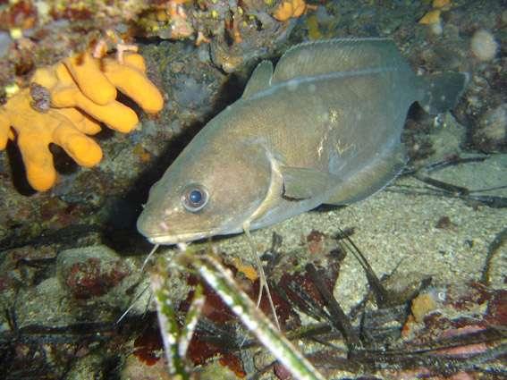 Nage ondulante, nage filée… Il existe de nombreuses nages chez les poissons. © File Upload Bot (Magnus Manske), Wikipédia, CC by-sa 2.0