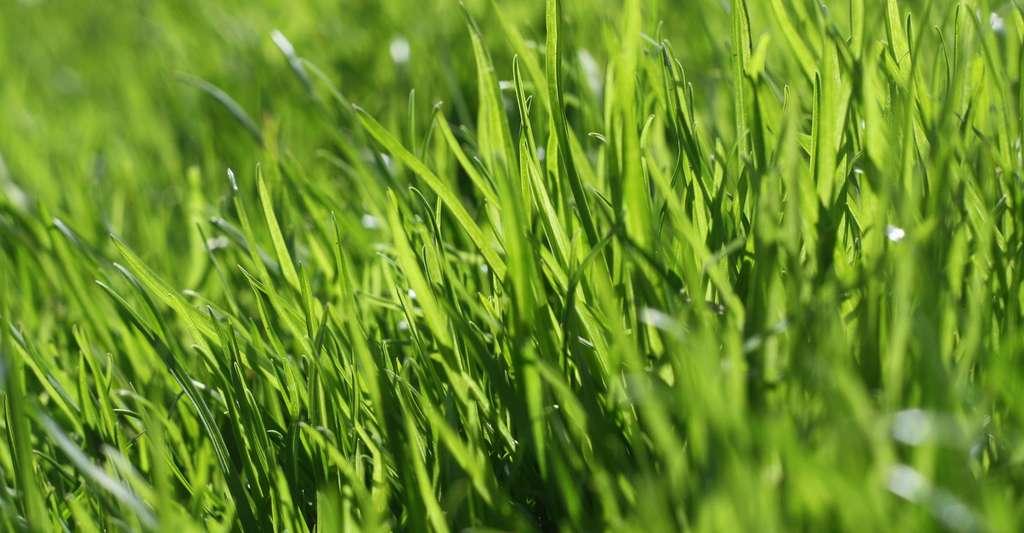 Pour le semis, veillez à respecter les doses indiquées sur votre paquet de semences. © Morton Graae, Pixabay, DP