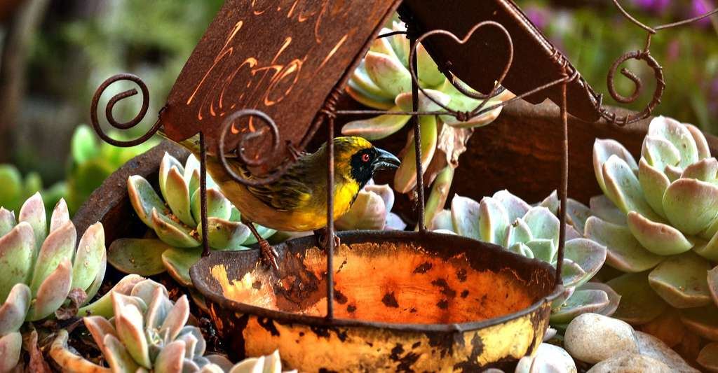 Nos jardins attirent les oiseaux. © Agnali - CCO