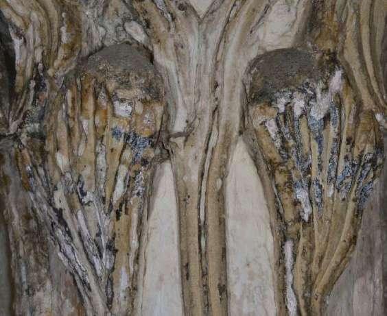 Le champignon crée des fissures et dégrade le calcaire. © João Trovão