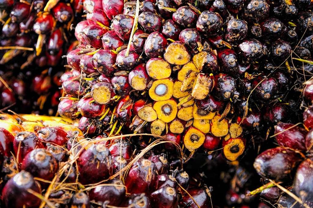 L'huile de palme est connue pour ses impacts négatifs sur l'environnement. © tristantan by Pixabay