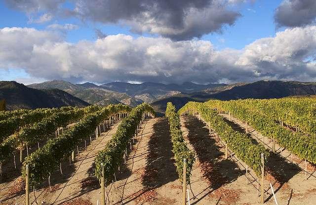 Les vignes se sont développées aux dépens de la faune et de la flore locale. © Andy Simonds, Flickr, cc by nc 2.0