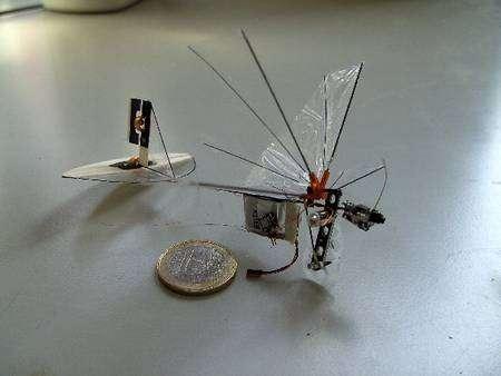 Le Delfly Micro. On remarque les deux roues dentées (blanches) qui actionnent les ailes par une fine bielle. L'élément rectangulaire porte la batterie et l'émetteur-récepteur. A l'avant, on distingue la minuscule caméra. L'empennage, à l'arrière, est similaire à celui d'un avion. En revanche, les ailes, propulsives et battantes, sont originales. Les ailes supérieures sont ici bien relevées. On voit bien l'aile gauche inférieure. L'aile droite inférieure est mal visible. Les deux plans, inférieur et supérieur, battent en opposition de phase, l'un se relevant quand l'autre s'abaisse. © TU Delft