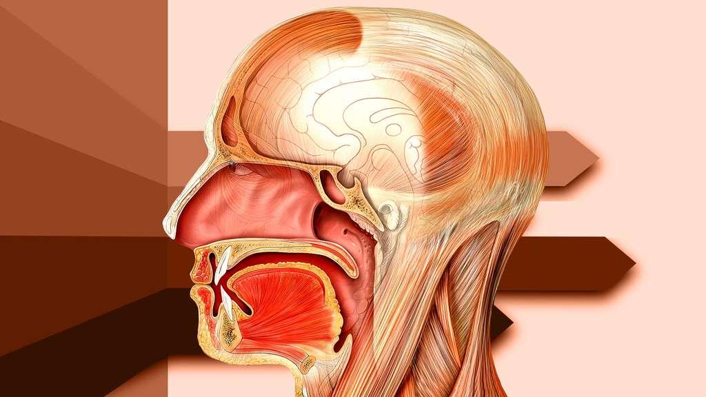 Anatomie de la tête : détail de la bouche