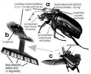 Le Cyborg beetle et ses implants. Le coléoptère en vol (c) doit porter près de 240 mg... © MEMS 2008/Technical Digest