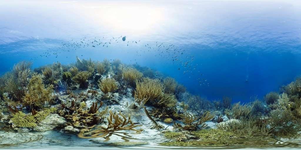 Cette photo montre une zone encore bien vivante du récif corallien de Bonaire. Cette île fait partie des îles Sous-le-Vent, dans les petites Antilles. Elle est située à l'est de Curaçao, au large du Venezuela. © Catlin Seaview Survey