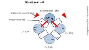 Cliquer pour agrandir. Situation initiale des flux d'eau salée dans l'unité de dessalement. Les 4 flux sont séparés par des liaisons en polystyrène qui ne laissent passer les ions qu'en fonction de leur charge : ou positive, ou négative. Ces ions se déplacent du flux le plus concentré vers ceux qui le sont moins (flèches rouges). © G. Macqueron / Futura-Sciences