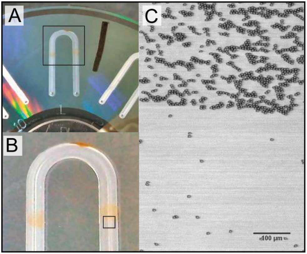 Les disques (en A) utilisés sont du même format que les DVD, mais disposent de réservoirs (visibles en B) dans lesquels on place les échantillons. Grâce à la photodiode, on peut observer le contenu dans le détail (en C) et obtenir une idée de la concentration en lymphocytes T CD4+, accrochés à un anticorps. © Russom et al., Lab on a Chip