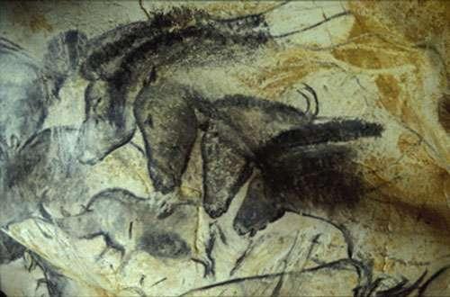 Fig. 12. La réussite esthétique de certains dessins, comme ces chevaux de la Grotte Chauvet, prouve que l'on avait affaire souvent à des artistes consommés. © Cliché J. Clottes. Tous droits réservés