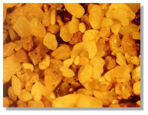 Vues microscopiques des sables bioclastiques et volcanoclastiques