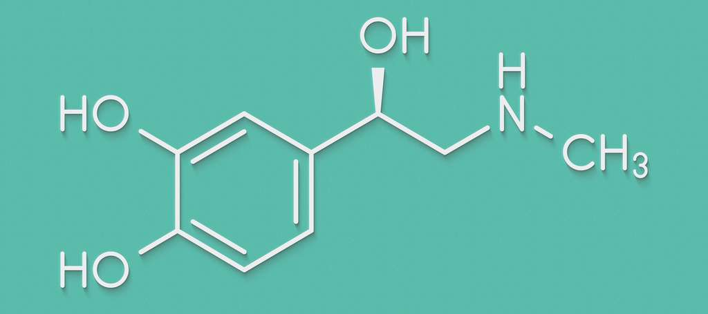 L'adrénaline ou épinéphrine est le (R)-4-(1-hydroxy-2-(méthylamino)éthyl) benzène-1,2-diol, de formule brute C9H11NO3. © molekuul.be, Fotolia
