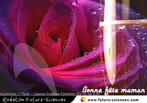 Rose et champagne