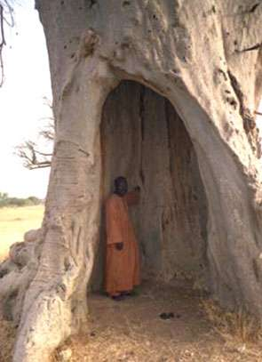 Baobab creux pouvant accueillir 5-6 personnes © ICUC