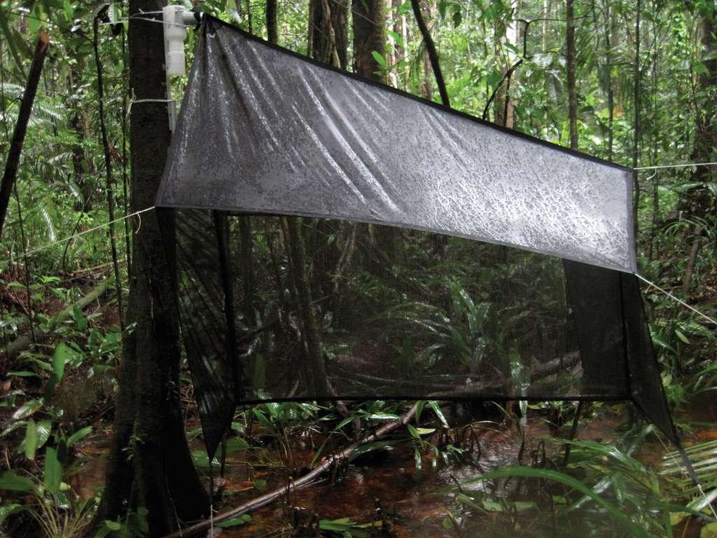 Pour compter les insectes, les entomologistes allemands ont utilisé des pièges Malaise comme celui-ci, installé en forêt en Guyane. © G. Lamarre, Q. Molto, P. Fine et C. Baraloto, Wikipedia, CC by 3.0