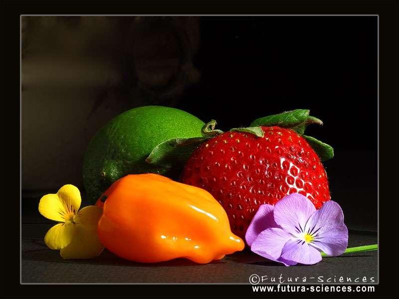 Cliquez pour accéder aux plus beaux fonds d'écran vitaminés