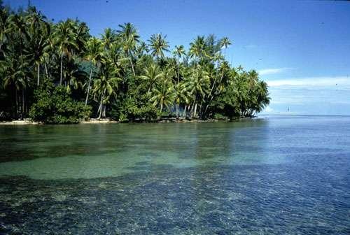 Récif Polynésie © Catherine Gabrié WWF - Tous droits de reproduction interdit