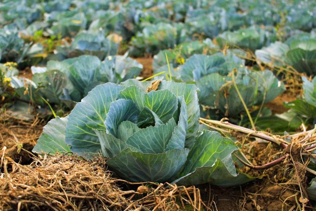Réorienter l'agriculture vers plus de légumes permettrait d'économiser 51 millions d'hectares de terres cultivables. © Arnaldo Adana, Unsplash