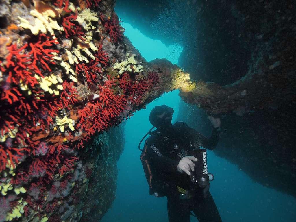 Le corail rouge apporte une grande richesse esthétique aux grottes provençales. Ici, corail dans la grotte de Riou, en Méditerranée. © J.-G. Harmelin, tous droits réservés, reproduction interdite