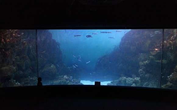 L'aquarium plein en fin d'expérience, au National Marine Aquarium de Plymouth, retient plus l'attention des visiteurs, fascinés. © Cracknell et al. 2015, Environment & Behavior, CC by nc 3.0