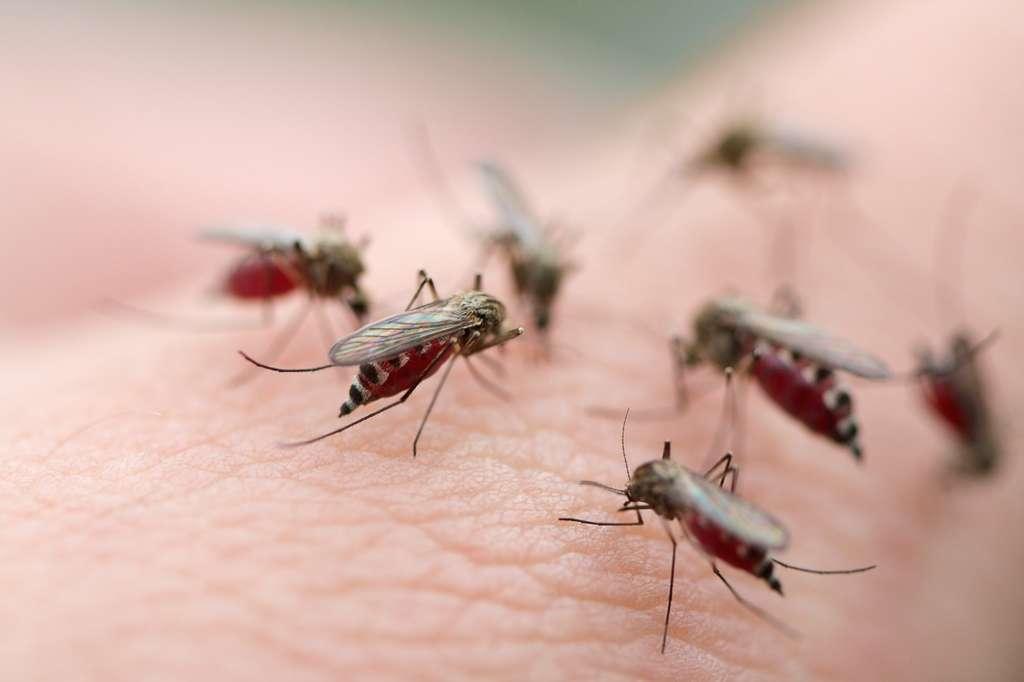 Le moustique est attiré par certains types de peau en raison notamment des colonies de bactéries et champignons qui l'habitent. © Mycteria, Fotolia