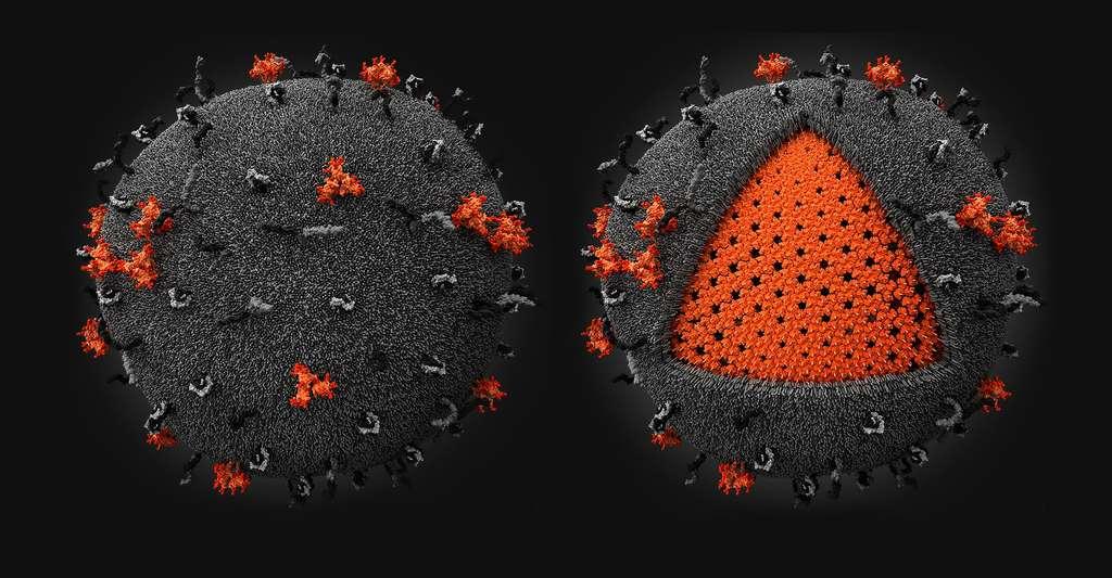 Le virus du Sida est en fait une sphère constituée d'une membrane lipidique, comme les membranes qui entourent les cellules. © Visualscience, CC BY-SA 3.0
