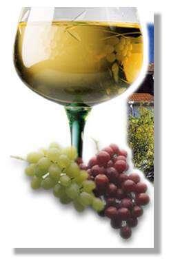 Le vin est à consommer avec modération.