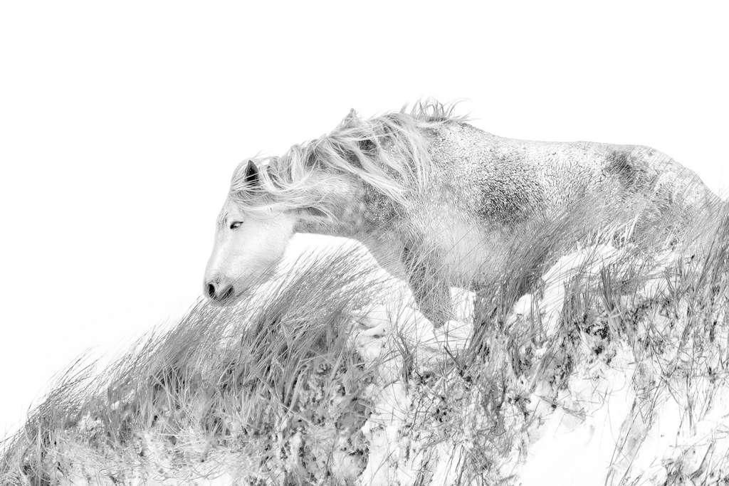 Un cheval sauvage, crinière au vent