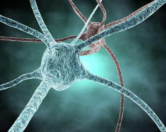 Lors de la mémorisation, les synapses se renforcent. Ce processus est arbitré par la protéine ARC. © juliendn, Flickr, cc by nc sa 2.0