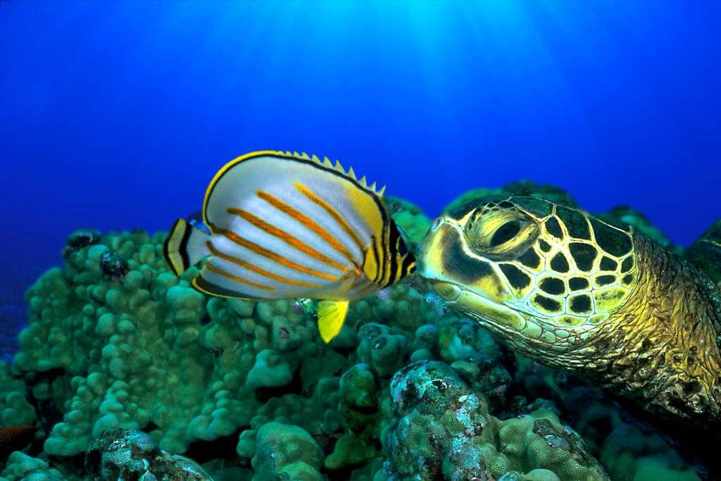 Baiser sous-marin entre un poisson et une tortue de mer
